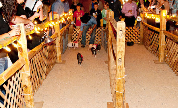 pig-races-low-res_edited-1